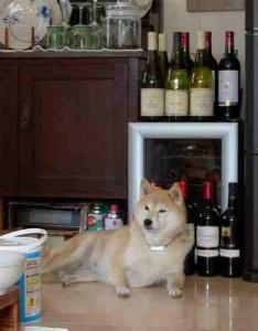 未来とワイン