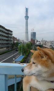 未来タワー