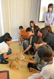 千葉愛犬5