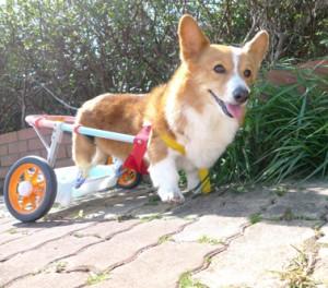 蘭丸車椅子1