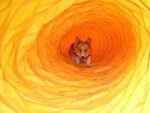 蘭丸トンネル
