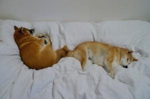 食ったら、羽毛布団に包まれて寝るんだじょ!